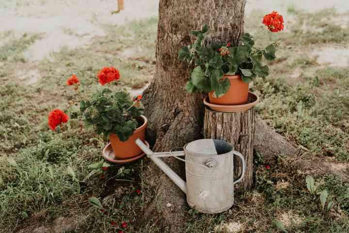 vasi di fiori rossi