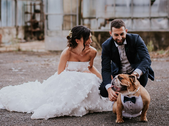 Wedding Dog Sitter: un professionista per i nostri amici animali