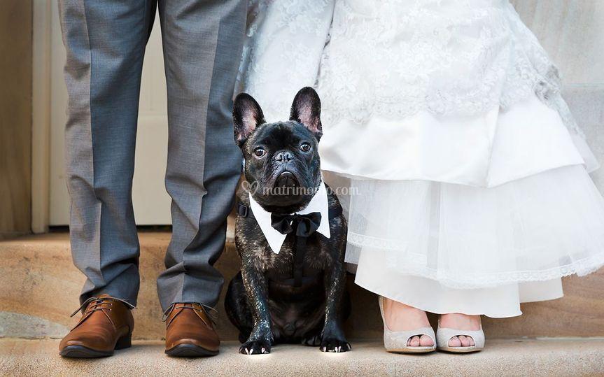 Matrimonio Bulldog