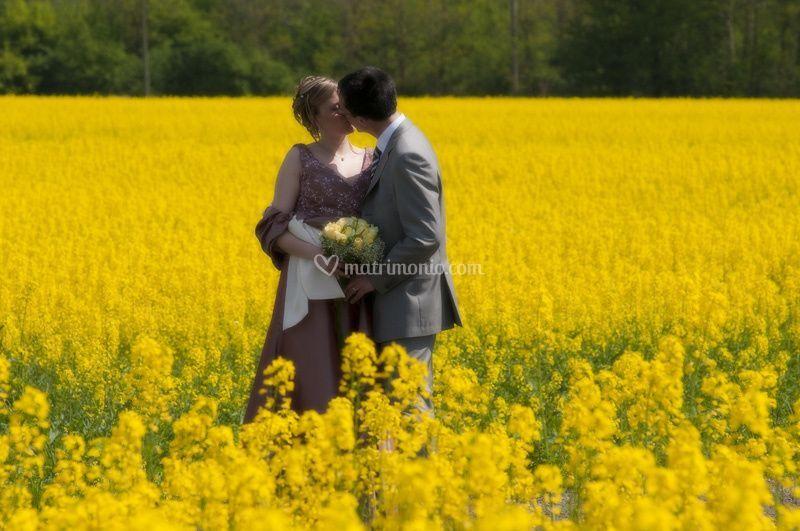 Sposi in un campo di fiori gialli