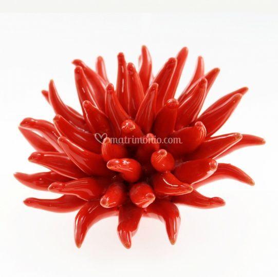 Riccio marino rosso