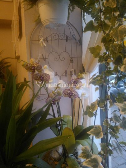 Vetrina con orchidee