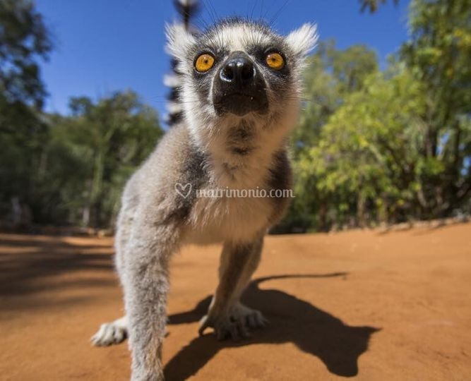 Madagascar Quando arrivi?