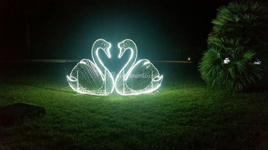 Cigni luminosi