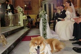 Dog Sitting for Wedding