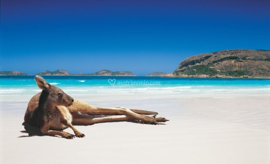 Lucky Bay  - Australia