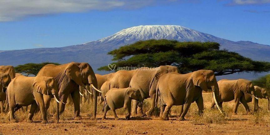 Africa - Veloma Viaggi