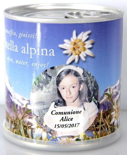 Bomboniere Stella Alpina foto