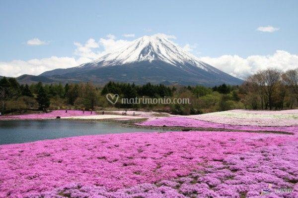 Ashi Giappone