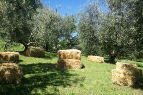Società Agricola Campolungo