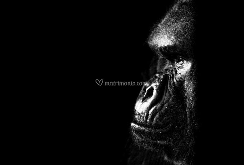 Gorilla - Uganda e Ruanda