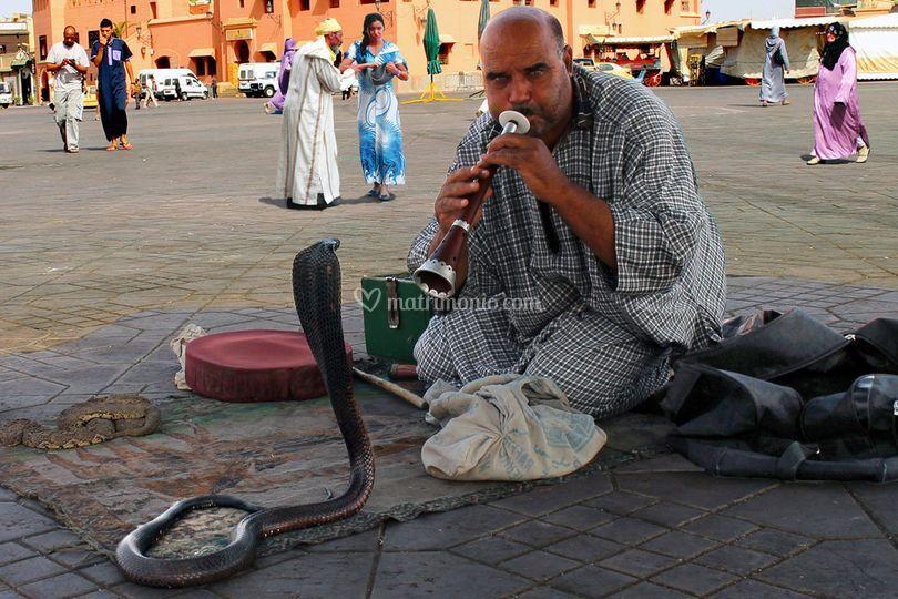 Marrakech - Incantatore Serpen