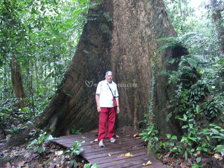 Borneo Malese - La foresta