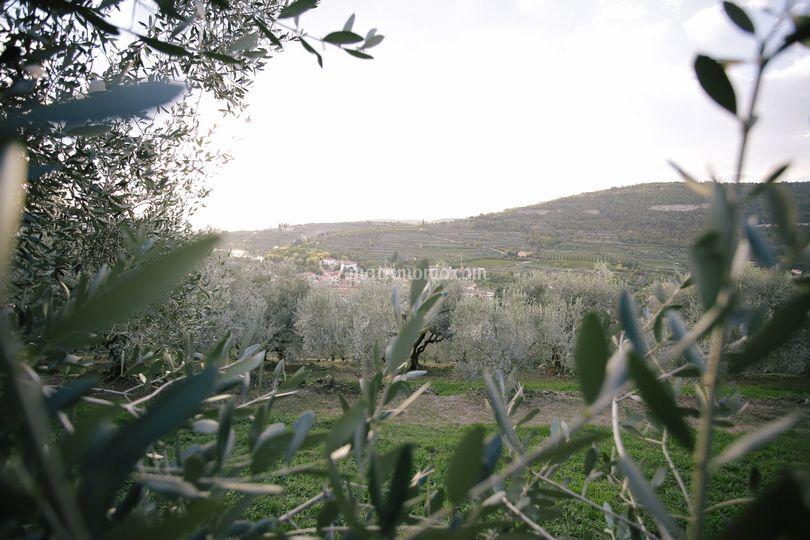 Olivetto Cordioli