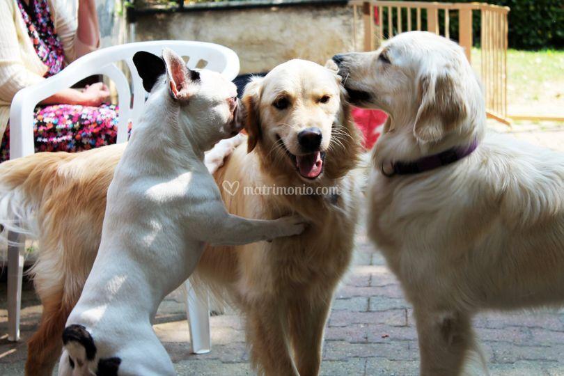 Discorsi canini