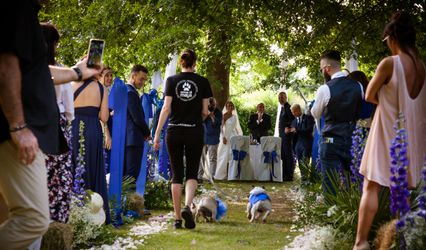 Orma di Maya - Wedding Pet Sitter