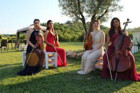 Iris quartet