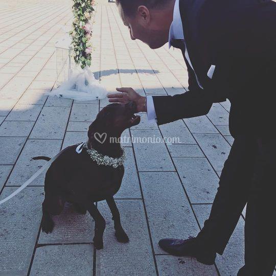 Servizio di dogsitting