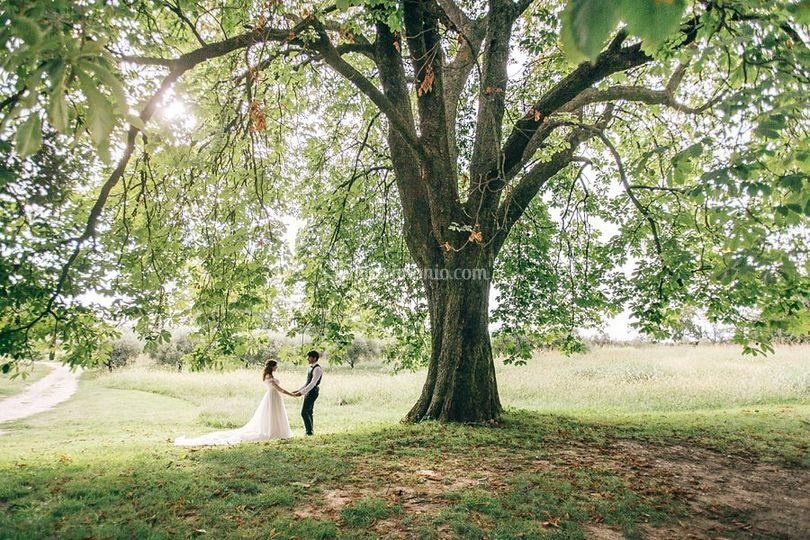 Wedding Villa le Zerbare