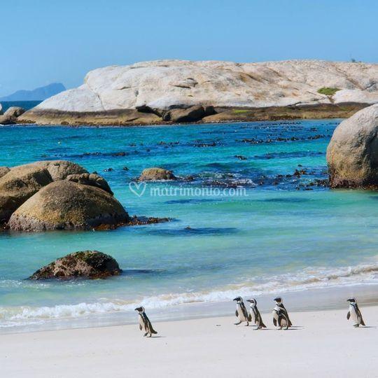 Cape town- boulders beach