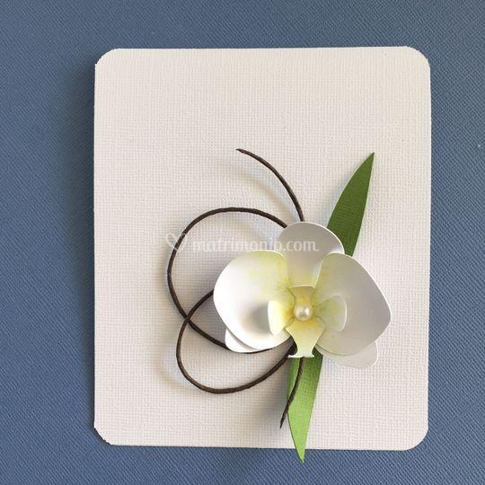 Il cesto dei tesori for Costo orchidea