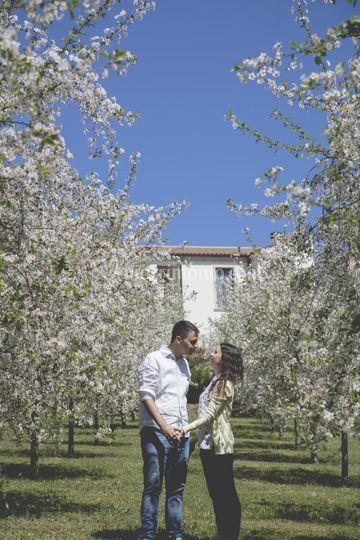 Cherry Blossom data online dating matrimonio com datando un uomo di 11 anni più di te