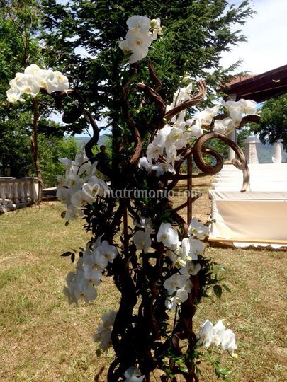 Ramo legno + Phalaenopsis