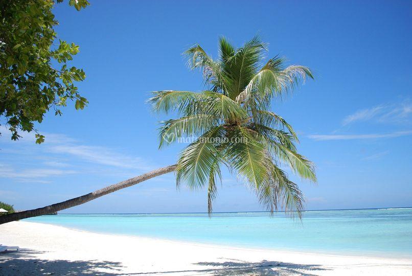 Viaggio dubai & maldive