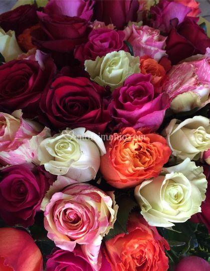 Rose di vari colori