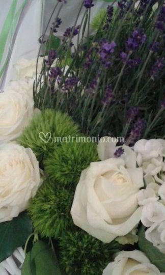 Bianco verde e lavanda