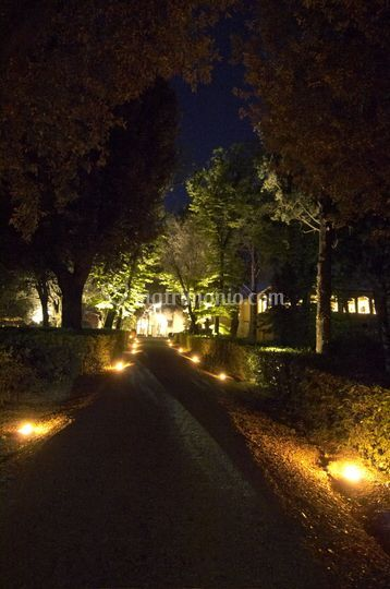 Viale by night