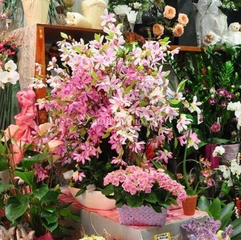 Armonie di fiori rosa