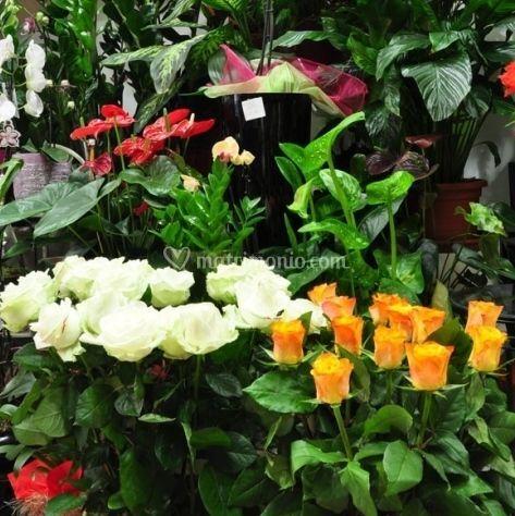 Rose a gambo lungo e fiori per mazzi
