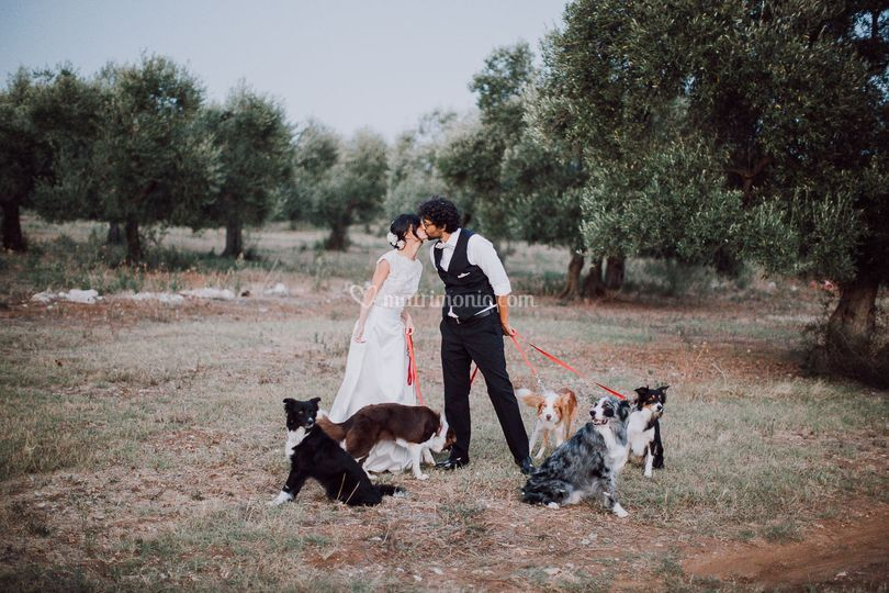 Wedding with your dogs
