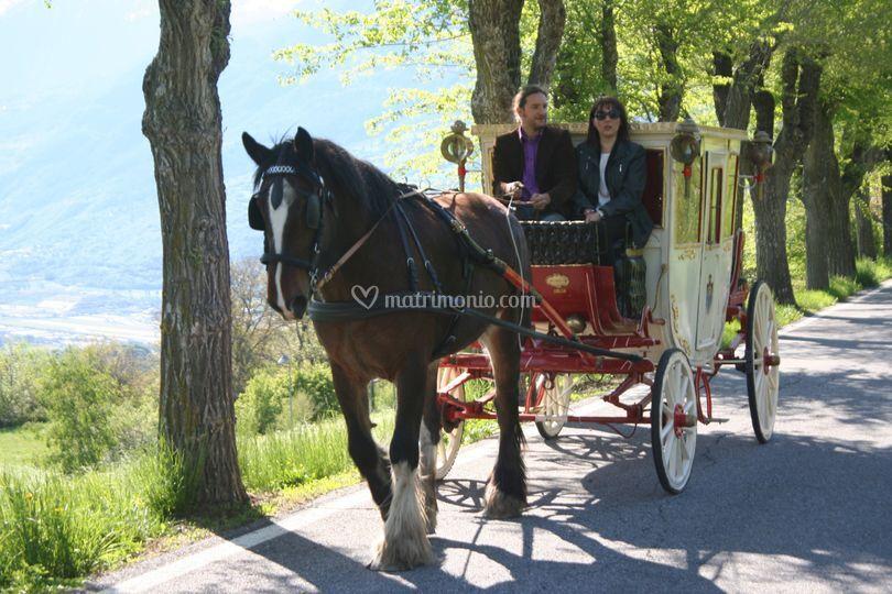 Shire Horse Caleche