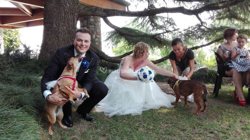 Servizio wedding dog sitter