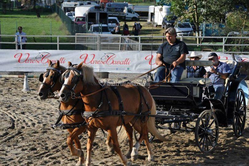 Fiera Cavalli di Varese