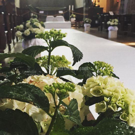 Allestimento Chiesa Ortensie : Flowersliving di petrioli marta