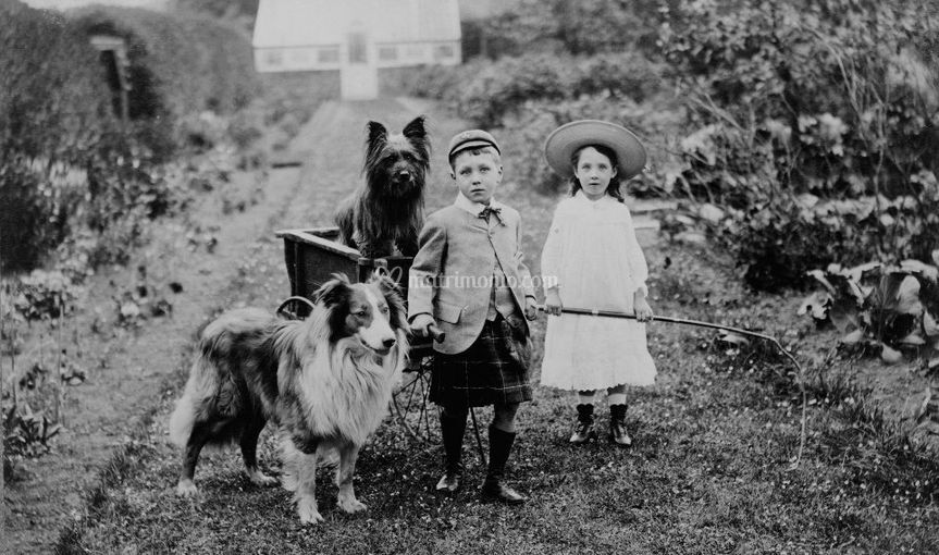 Dog retro