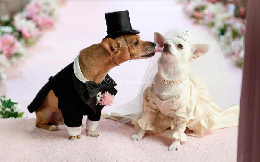 Dog wedding sitter