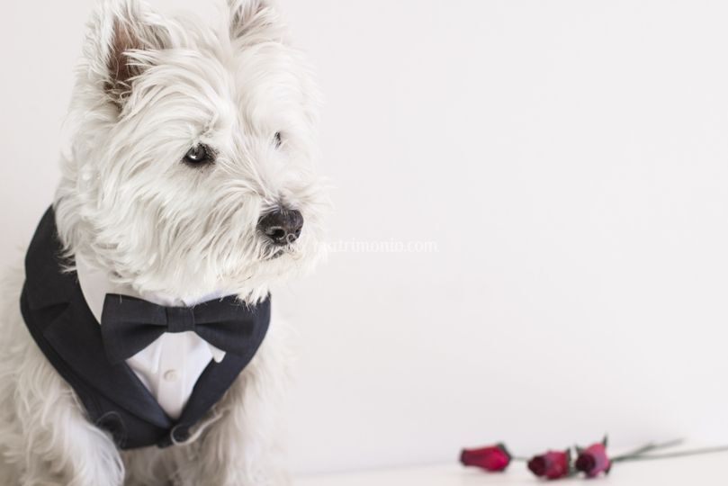 BowPawTie Accessori per Cani