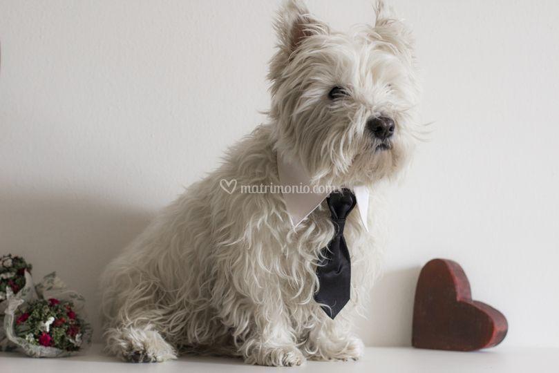 Colletto con cravatta