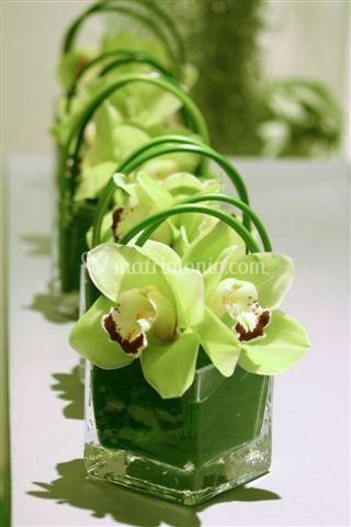Piccoli Centrotavola Con Orchidee Cymbidium Verde