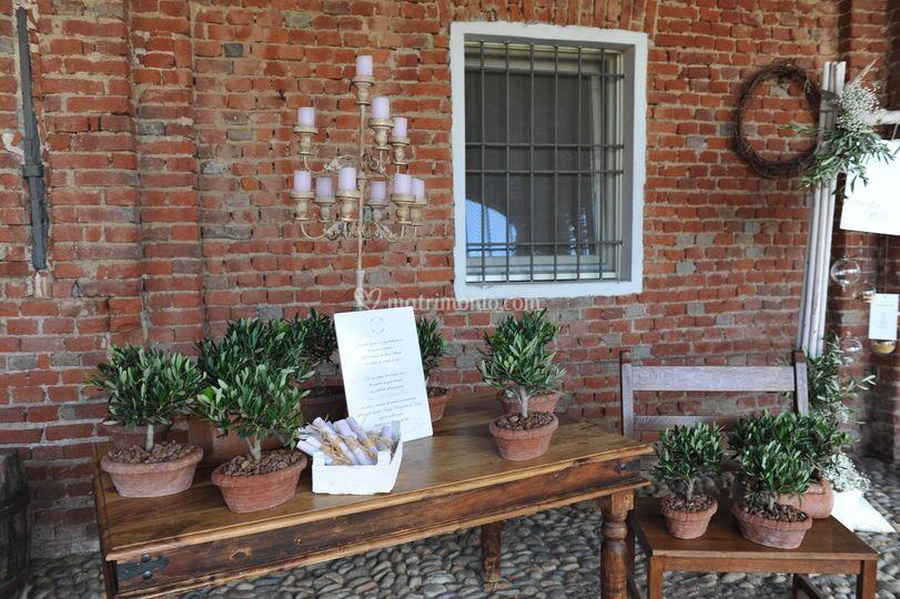 Bomboniere con piante di ulivo