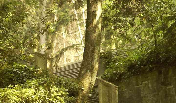 Il bosco e l'antica scalinata