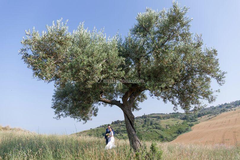Abbracci Sotto l'albero