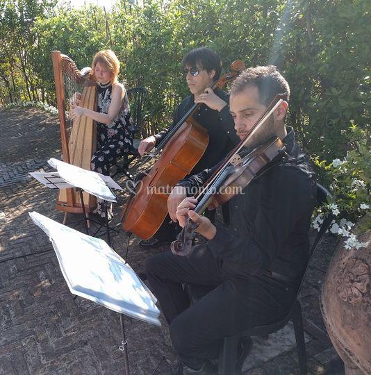 Arpa Violino e Violoncello
