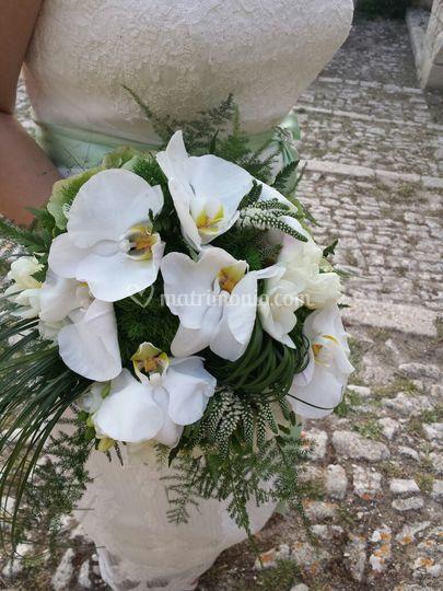 La fioreria di gravina maria for Costo orchidea