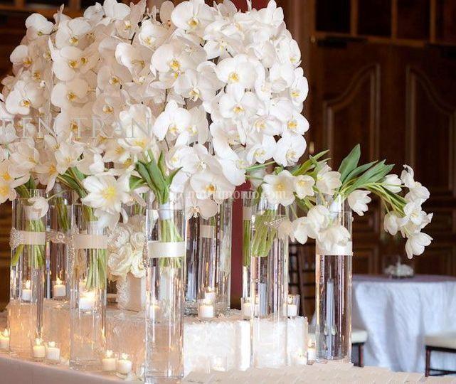 Matrimonio In Total White : Total white di un fiore tra i fiori foto