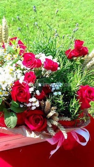 Erbe aromatiche e rose red